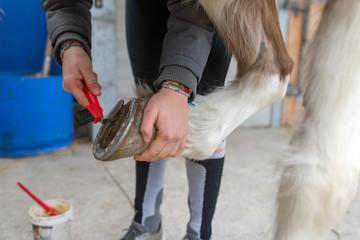 soin des pieds de son cheval