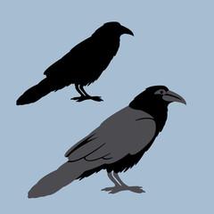 Raven vector illustration style Flat set