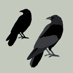Raven vector illustration style Flat set