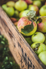 Green and red apples in crate
