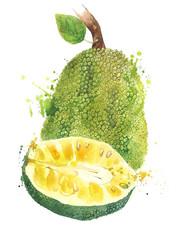 Jackfruit fruit watercolor painting illustration isolated on white background