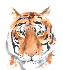 Tiger head portrait watercolor painting isolated on white background