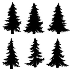 Fir Tree Silhouette