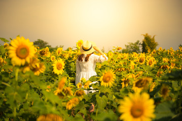 Tourist is travel into Sunflower field.