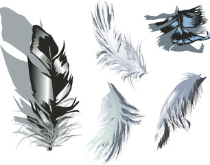 five fluffy grey feathers isolated on white