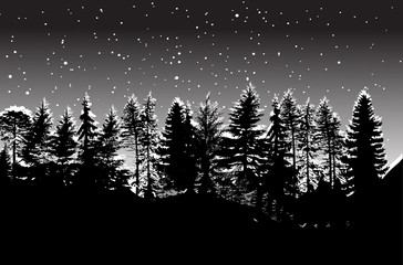 winter coniferous forest on grey background