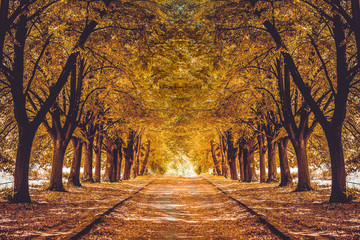 Beautiful alley in a park with colorful trees, autumn landscape. Garden walkway with picturesque orange autumn forest Fototapete
