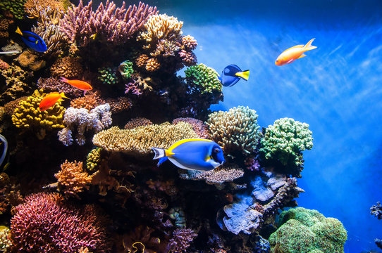 Tropical fishes on the coral reef