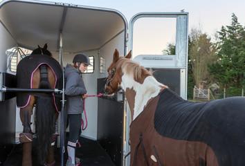 rentrer les chevaux dans le van