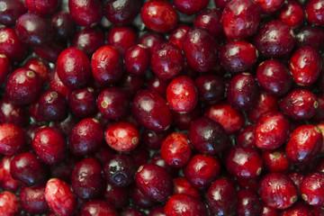 Cranberries, close up.