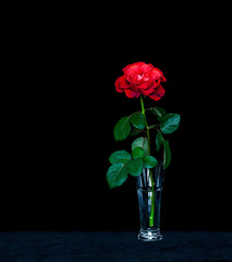 Amazing red rose in crystal vase on velvet textured table cloth. Floral wallpaper