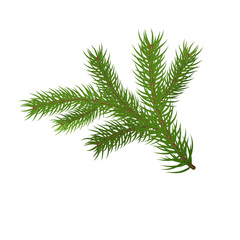 Green spruce branch. Fir branches. Isolated on white vector illu