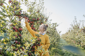 Young woman picking up apples