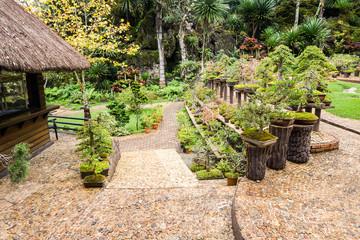 Beautiful Bonsai garden
