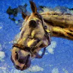 Pferd - Porträt - virtual Painting