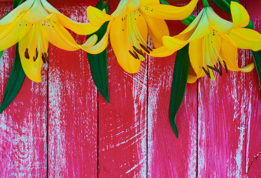 Three yellow lilies on ared wooden surface, top view