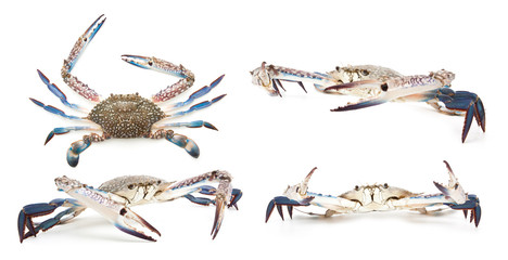 Collection of blue crab isolated on white