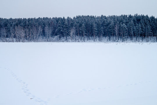 Winter field with the line of the forest
