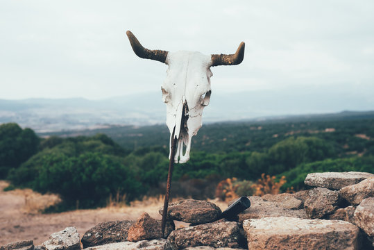 Cow skull on stick, Osilo, Sassari, Italy