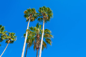 palm trees under clear sky in California