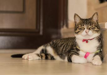 Tabby cat sleeping on the floor near the door