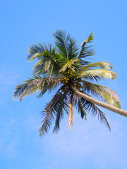 Coconut palms in the sky
