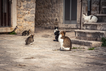 Playful cats waiting for food in old Europe city street