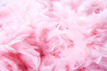 Pink soft feathers background