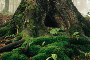 Closeup tree covered by moss