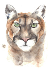Mountain lion puma big cat head portrait watercolor painting illustration isolated on white background
