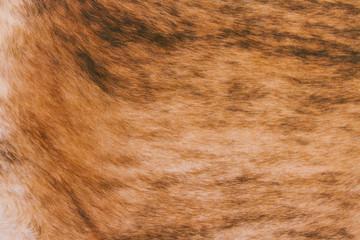Brown Argentinean cowhide texture