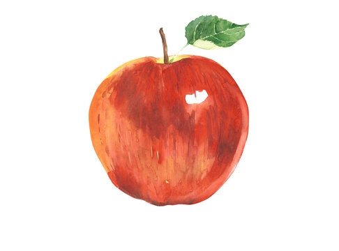 Apple red watercolor illustration isolated on white background