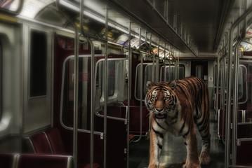 Tiger on the Subway. A Siberian tiger walking through an urban subway car.