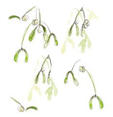 Mistletoe. New year card. Hand drawn watercolor illustration