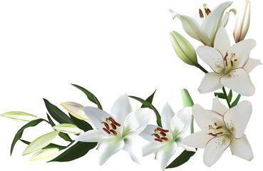 isolated corner from white lily flowers