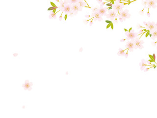 桜 イラスト
