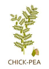 Chick pea plant with leaves and pods. Vector illustration.