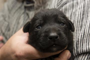 Black puppy dog.