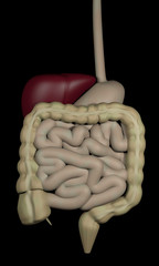 3d rendering of the human digestive system, isolated over black