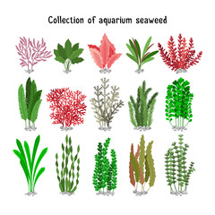 Seaweed set vector illustration. Yellow and brown, red green aquarium seaweeds biodiversity isolated on white
