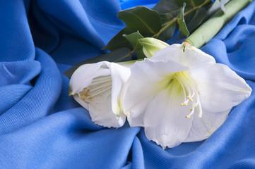 white flower amarillo