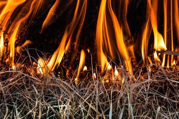 Dancing flames in wild fire grass