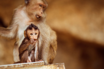 Monkey is sitting with child outdoors at blurred background.
