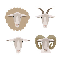 Vector sheep, goat ram lamb head isolated. Flat, cartoon style