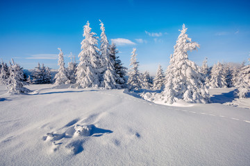 Sunny winter morning in Carpathian mountains