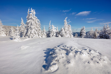 Marvelous winter morning in Carpathian mountains with snow cover