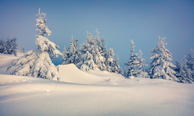 Fantastic winter wiev in Carpathian mountains with snow covered