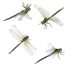 set of macro shots of dragonfly