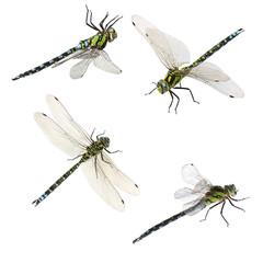 set of macro shots of dragonfly