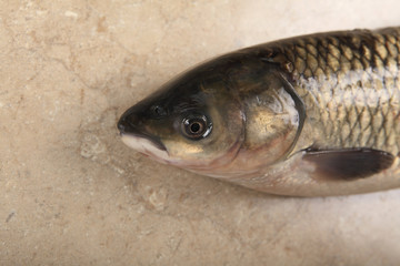 Fish head. Photo of live carp close-up on the table